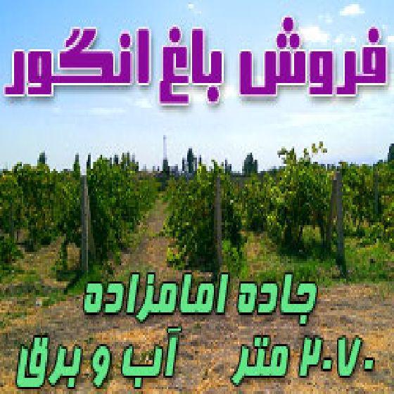 فروش باغ انگور در جاده امامزاده روستای گلپاشین،2070 متر،آب و برق،دیوار کشی شده