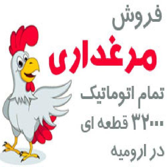 فروش مرغداری تمام اتوماتیک 32000 قطعه ای در ارومیه،کد G23