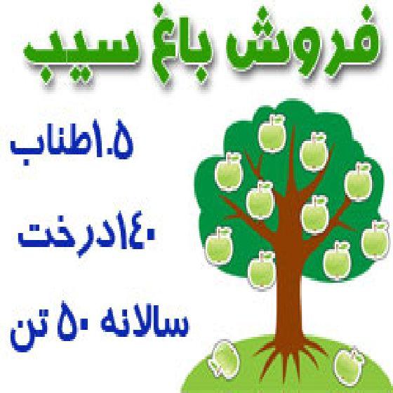 فروش باغ سیب در جاده بالانج ، روستای رحیم آباد ،140 درخت سیب سفید بزرگ،50تن محصول سالانه،کد S33