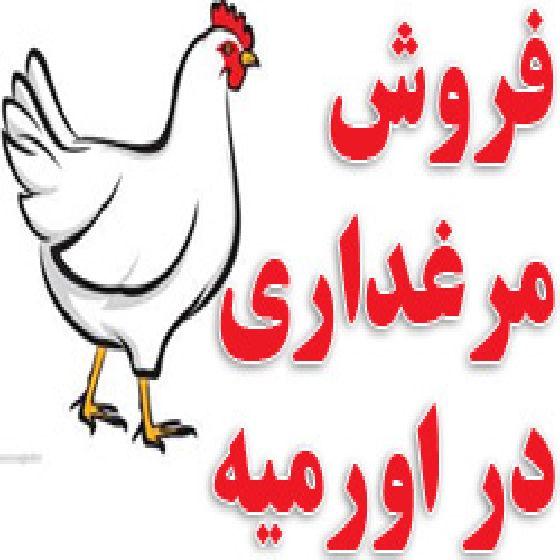 فروش مرغداری  با ظرفیت 30هزارقطعه  فول اتوماتیک  فعال در ارومیه،1 کیلومتر فاصله با جاده اصلی