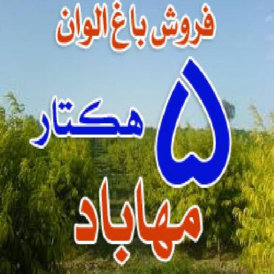 فروش باغ 5 هکتاری در مهاباد،سیب ، شلیل و هلو با آبیاری قطره ای،سند 6 دانگ تک برگ