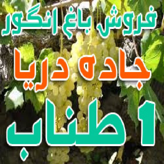 فروش باغ انگور 1 طناب محلی جاده دریا روستای قره حسنلو ارومیه