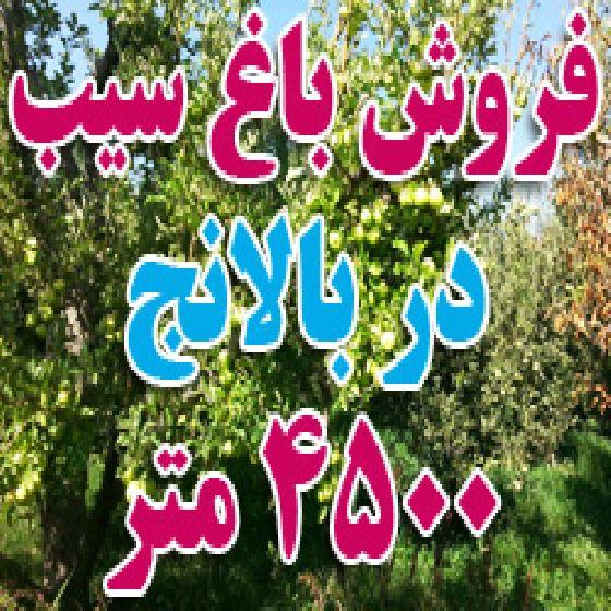 فروش 1 طناب باغ سیب در جاده بالانج ارومیه،4500 متر سیب سفید