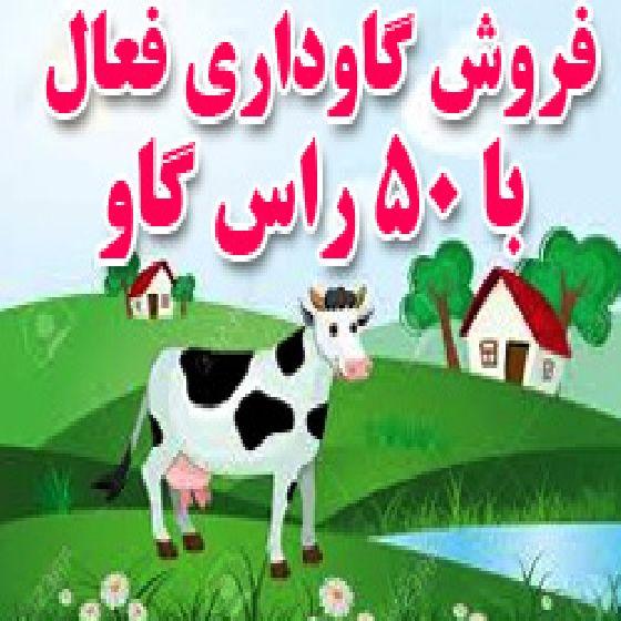 فروش دامداری فعال با 50 راس گاو شیرده در ارومیه