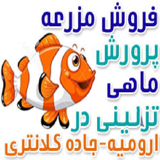 فروش پرورش ماهی های تزئینی درارومیه،جاده شهید کلانتری با ظرفیت تولید سالانه 1 میلیون قطعه ماهی تزئینی