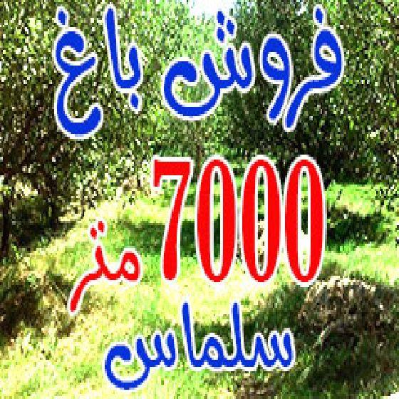 فروش باغ 7000 متر در سلماس