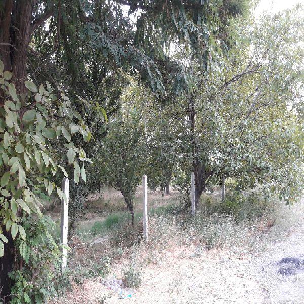 فروش باغ و باغچه 460-900 متردر جاده دریا ارومیه