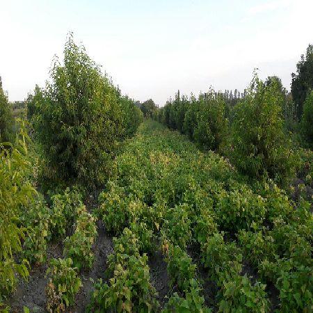 فروش زمین کشاورزی1.5طناب در جاده شهید کلانتری ارومیه