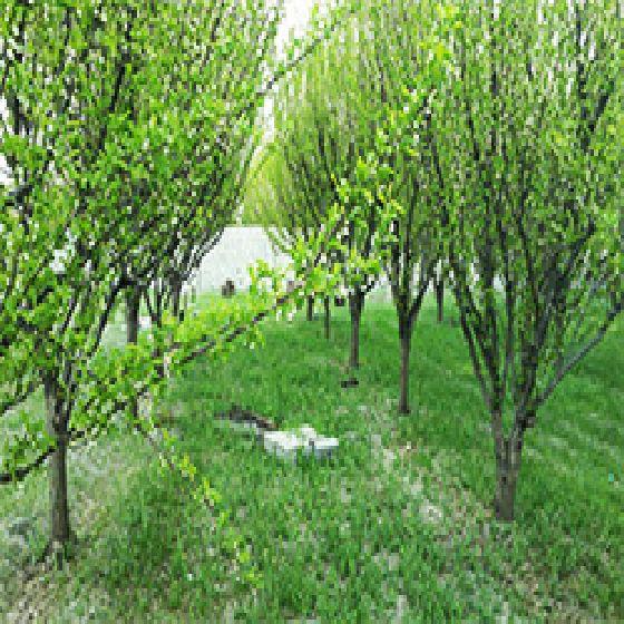 فروش باغ  الوان 1500 متری در صالح آباد ارومیه
