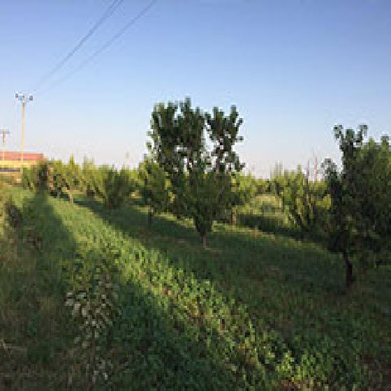 فروش باغ در20 کیلومتری جاده سنتو ارومیه
