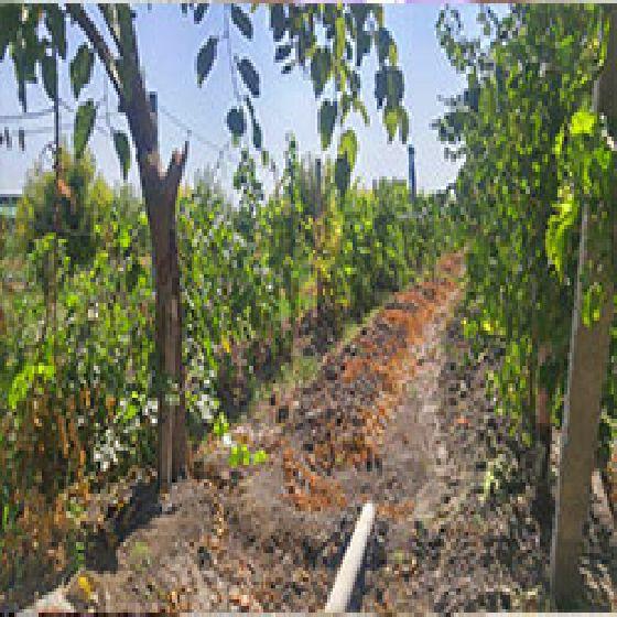 فروش باغ 3600متردر 11 کیلومتری جاده مهاباد
