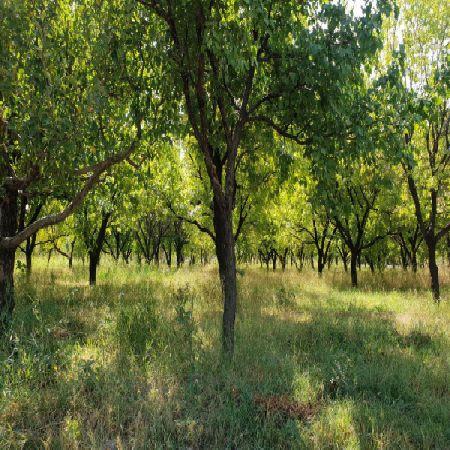 فروش باغ 1100 متر یکی از بهترین نقاط جاده سنتو ارومیه