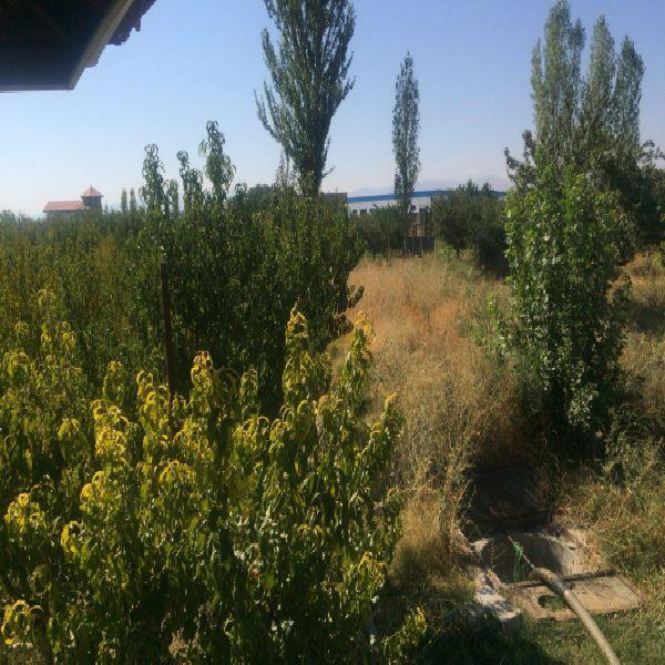فروش باغ 12000 متر جاده سنتو ارومیه