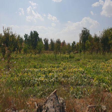 باغ 1100 متر جاده سنتو ارومیه