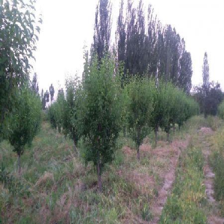 فروش باغ الوان 20200  متر جاده سلماس ارومیه