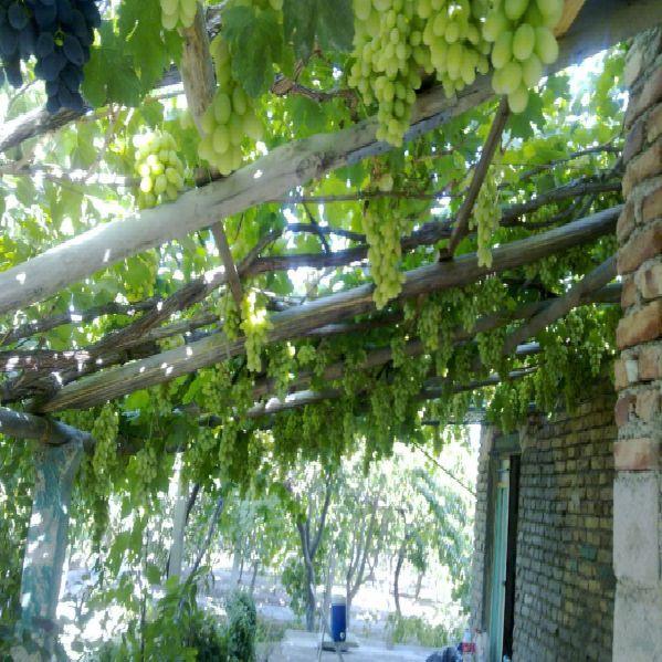 فروش باغ 1300 متر امامزاده ارومیه