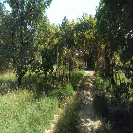 فروش باغ انگور و سیب 19640 متر بر جاده سلماس ارومیه