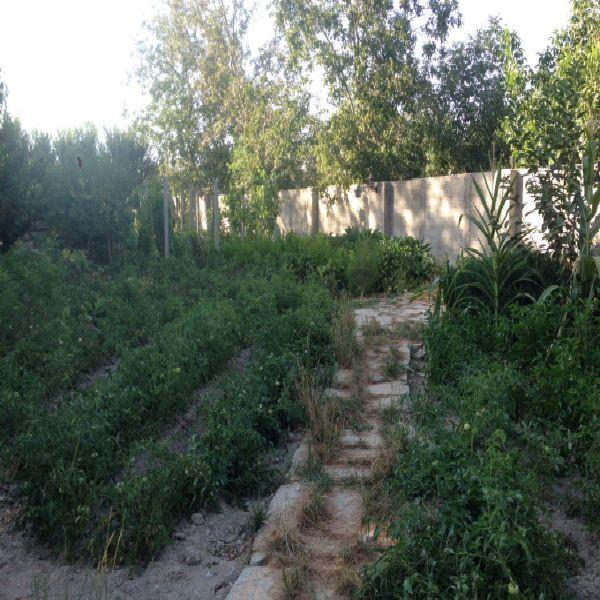 فروش باغ1000 متر جاده امامزاده ارومیه
