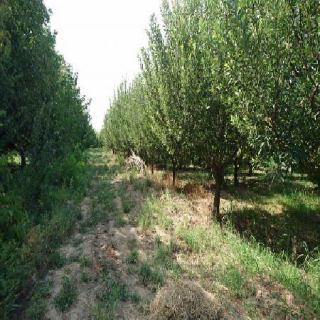 فروش باغ سیب 2016 متر 1 کیلومتری جاده امامزاده ارومیه