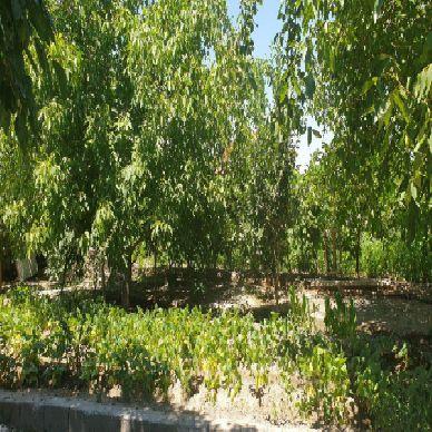 فروش باغ 1600 متر جاده امامزاده ارومیه