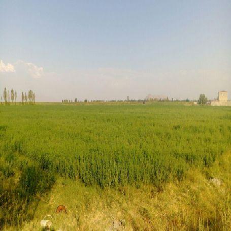 فروش زمین کشاورزی 28000 متر بزرگ در جاده ارومیه به سلماس