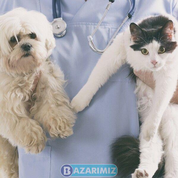 کلینیک دامپزشکی پاندا حیوانات خانگی در ارومیه دکتر علی ملکی فر
